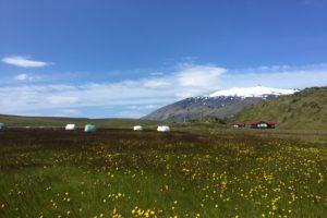 Summer in Iceland